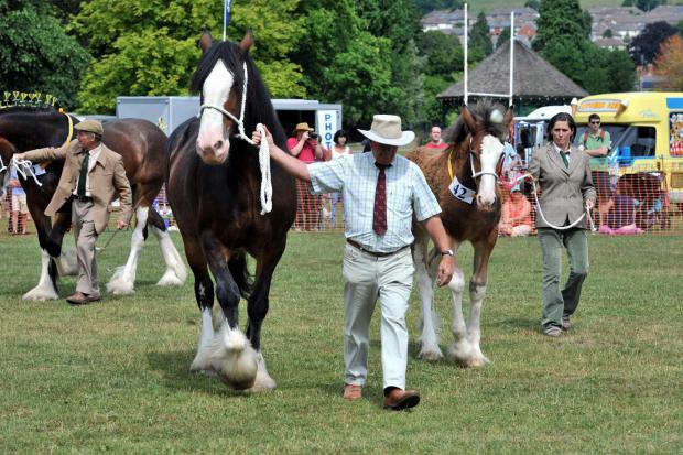 Free Press Series: Judging best in class at a previous edition of the Shire and Miniature Horse Show, in Bailey Park, Abergavenny. Picture: Mark Lewis