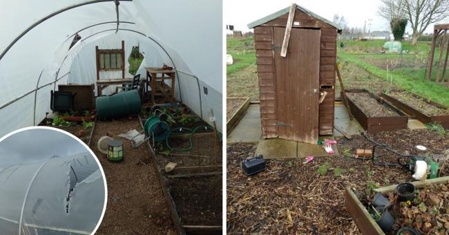Alleged vandalism leaves allotments 'wrecked' for third time in two months