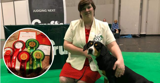 Alfie the Entlebucher from Abergavenny makes Crufts history