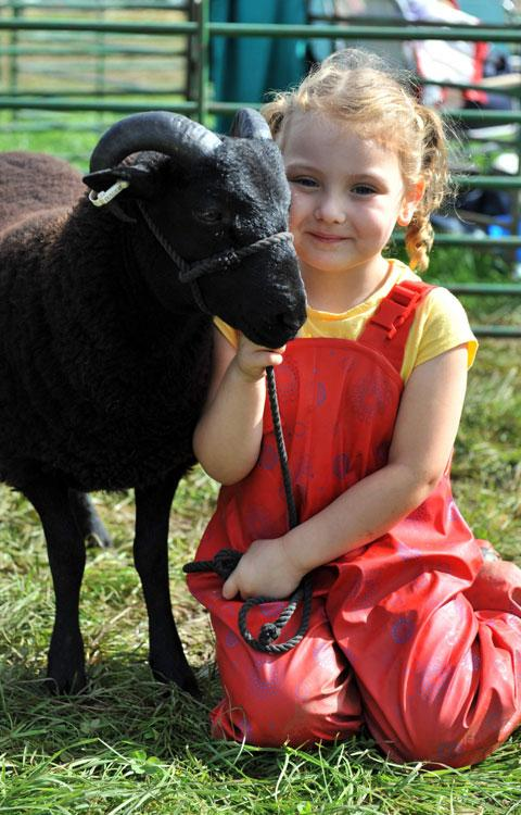 Alena Lawson, 5 with a Pedigree Black Wels Mountain Sheep called Pedro who is owned by Alena's grandad