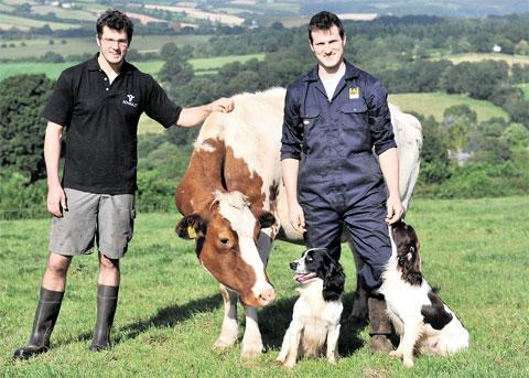HONOUR: Brothers Oli, 28, and Ed Partridge, 24, with Holstein Freisian Tufty and spaniels Merlin and Alfie, right