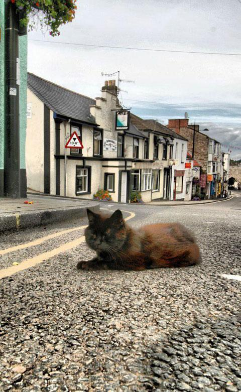 ALFIE: 'Probably the most famous cat in Monmouthshire'