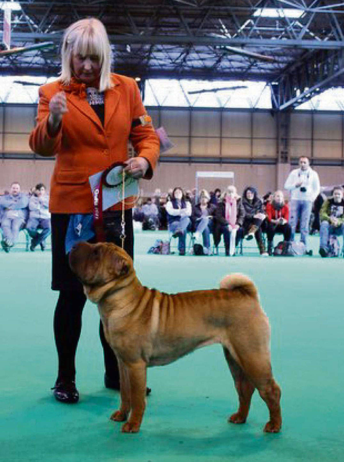 Gwent dogs win at Crufts