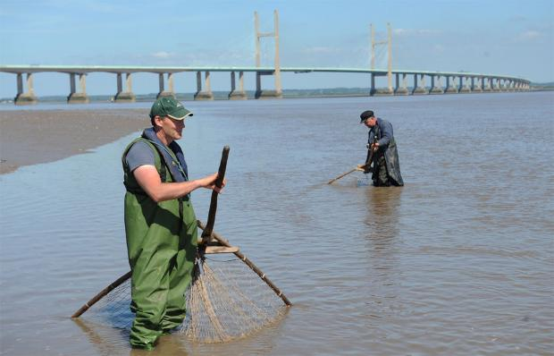 FISHING TRADITION: Brothers Richard and Martin Morgan fish with their lave nets on the River Severn