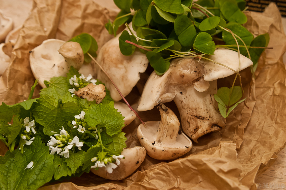 Foraging Courses in Bute Park, Cardiff